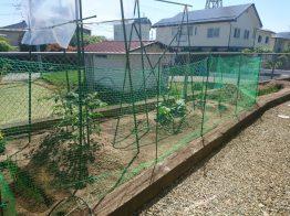 2020年夏…我が家の家庭菜園の結果